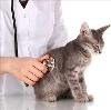 Ветеринарные клиники в Сапожке